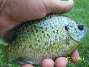 Fishing at Fair Harbor RV Park and Campground