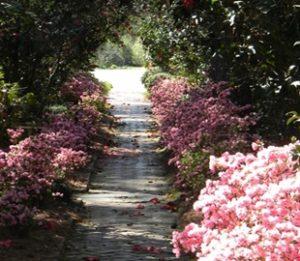 Massee Lane Gardens